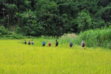 we started out trekk through rice fields and headed straight for the jungle