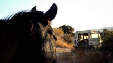 horse car-2