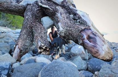 Massive driftwood