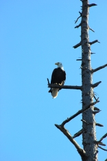 A bald eagle kept us company! They are not a rare sight in Coastal BC at all...