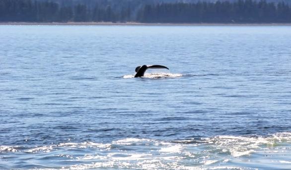 whale_Fotor